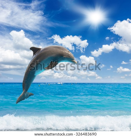 jumping dolphins, sunny  seascape with deep  ocean  waters  - stock photo