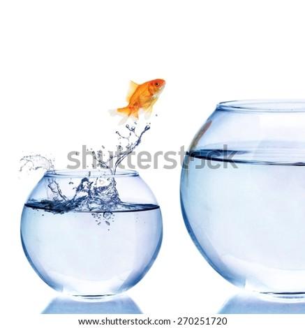 Jumping, Goldfish, Fish. - stock photo