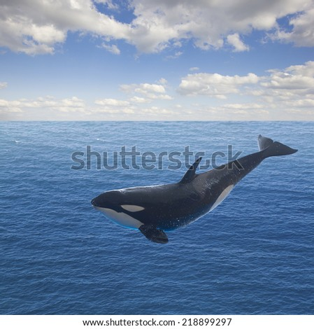 jumping killer whale, seascape with deep  ocean  waters and cloudscape
