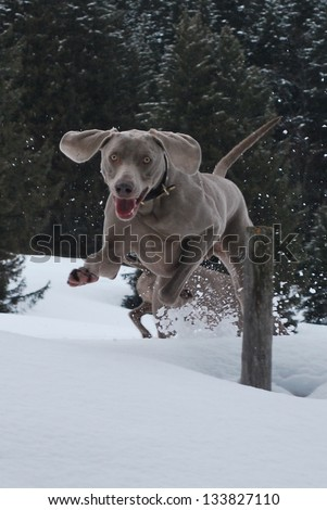 Jumping over the Snow - stock photo