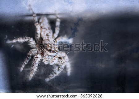 Jumping spider closeup - stock photo