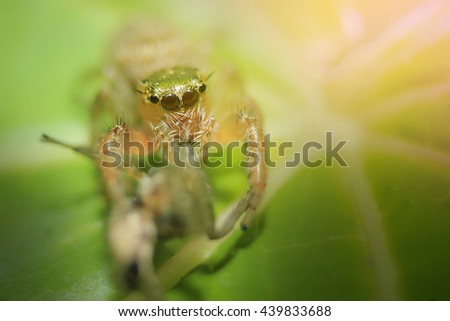 Jumping spider,Thailand.select focus.soft focus the field for background. - stock photo