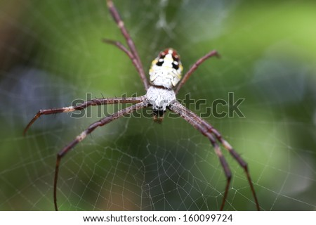 Jumping spiders - stock photo