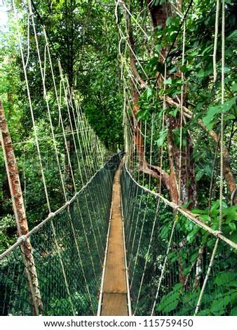 jungle adventure - stock photo