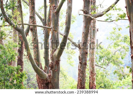 Jungle and rainforest with bark leaving the tree - stock photo
