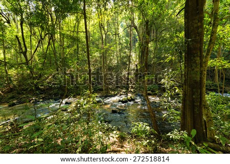 Jungle and river in Inthanon national Park near Chiang Mai, Thailand - stock photo
