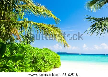 Jungle and Sea Coconut Getaway  - stock photo