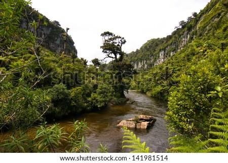 Jungle close to Pancake rocks. Porarari River - stock photo