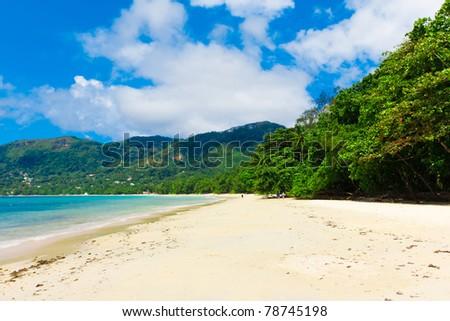 Jungle Dream Shore - stock photo