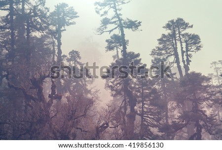 Jungle in Himalaya mountains, Nepal - stock photo