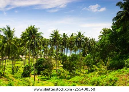 Jungle Landscape Beautiful Grove  - stock photo