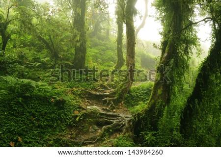jungle of Nepal 14 - stock photo