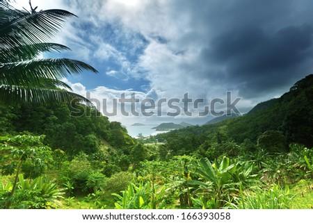 jungle of seychelles island  - stock photo