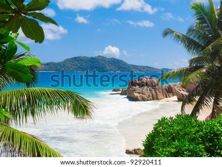 Jungle Palms Panorama - stock photo