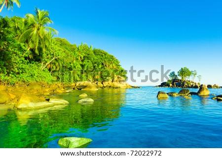 Jungle Panorama Palms - stock photo