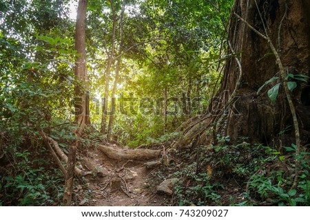 Jungle path in tropical rainforest background.