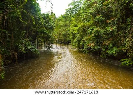 Jungle river in borneo - stock photo