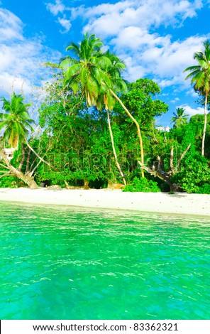Jungle Tranquility Dream - stock photo