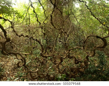 Jungle Vines Stock Photos, Images, & Pictures | Shutterstock