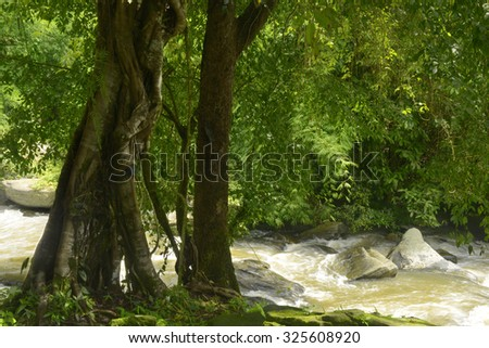 Jungle with river and waterfall