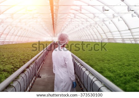 Junior agricultural scientists researching plants and diseases in greenhouse with parsley and green salad. Biotechnology woman engineer examining plant leaf for disease - stock photo