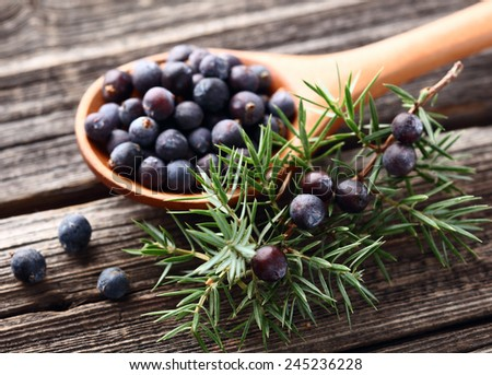 Juniper berries on a wooden background - stock photo