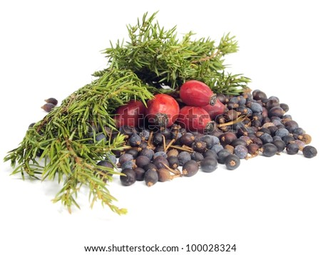 Juniper branch and berries on a white background - stock photo