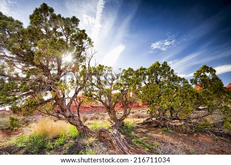 Juniper trees  surrounded by rock formations in Arches National park, Utah - stock photo