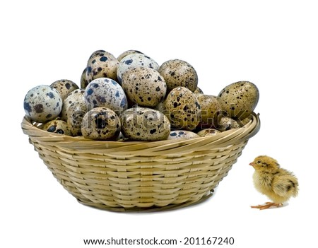 Just hatched nestling quail and basket with quail eggs isolated on white - stock photo