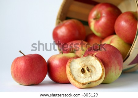 Just like the old saying: it takes one bad apple to spoil the bunch. - stock photo