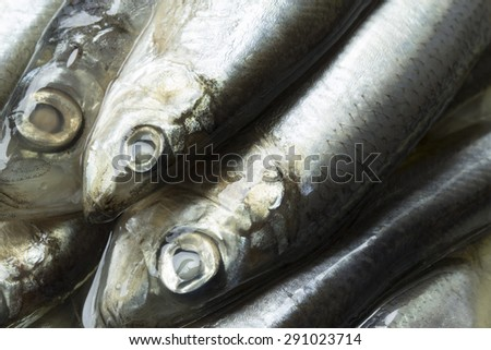 Just opened jar of spice salted sprats - stock photo