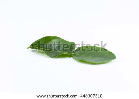 Kaffir lime leaf isolated on white background it herb and raw material in thai food - stock photo