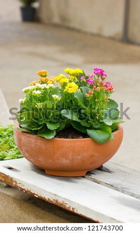 Kalanchoe flowers in clay pot. - stock photo
