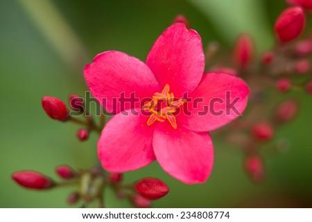 Kalanchoe Plant Flower Close Up - stock photo