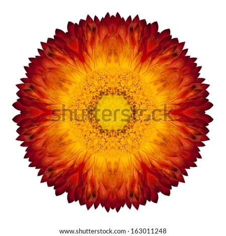 Kaleidoscopic Red Strawflower Mandala Isolated on White Background - stock photo