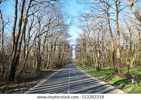 Kaliningrad region, deserted road through the Curonian Spit - stock photo