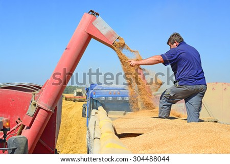Kalush, Ukraine - August 8: Overloading grain silo with a tractor in a car in the field near the town Kalush, Western Ukraine August 8, 2015 - stock photo