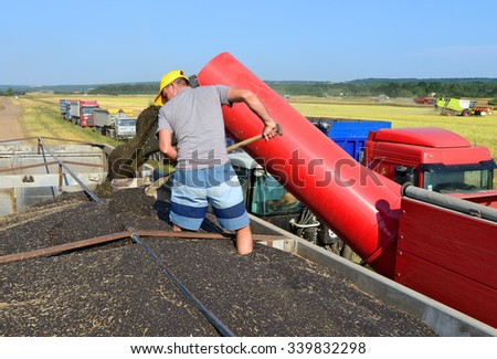 Kalush, Ukraine - July 21: Overloading rapeseed tractor with hopper in the car in the field near the town Kalush, Western Ukraine July 21, 2015