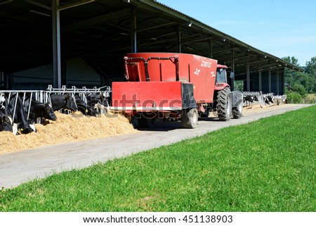 Kalush, Ukraine - July 11: The content of cows under a canopy. The distribution of animal feed on a dairy farm near the town Kalush, Western Ukraine July 11, 2016