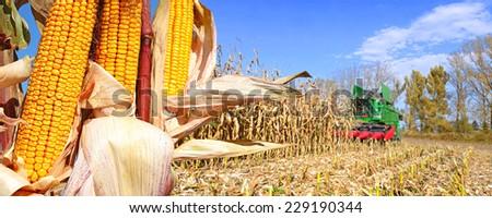 Kalush, Ukraine OCTOBER 14: Modern John Deere combine harvesting corn  in the field near the town Kalush, Western Ukraine October 14, 2014 - stock photo