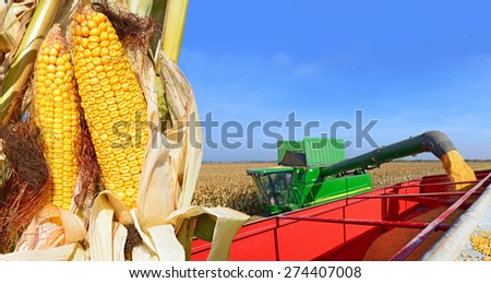 Kalush, Ukraine OCTOBER 8: Modern John Deere combine harvesting corn  in the field near the town Kalush, Western Ukraine October 8, 2013 - stock photo