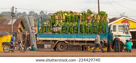 KAMPALA, UGANDA - NOV 1: A truck full of bananas on November 1, 2012 in Kampala, Uganda. Ten million tonnes of bananas are grown in Uganda every year, making it the world's second largest producer. - stock photo