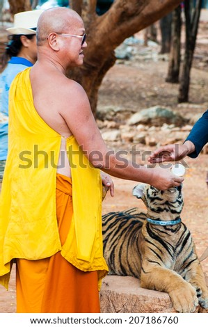 Kanchanaburi, Thailand - May 23, 2014: Buddhist monk feeding with milk a Bengal tiger at the Tiger Temple in Thailand.The Temple was founded in 1994 as a temple and sanctuary for wild animals. - stock photo