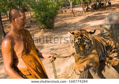 KANCHANABURI, THAILAND - NOVEMBER 30: Unknown buddhist monk with a bengal tiger at the Tiger Temple on November 30 2011, Kanchanaburi, Thailand. - stock photo