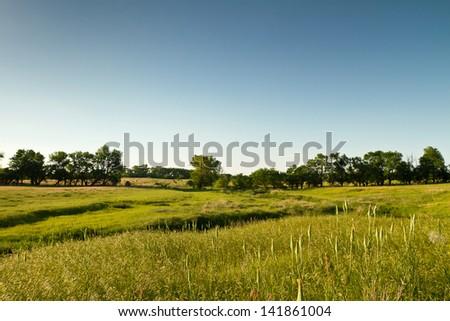 Kansas pastureland grasses and flowers - stock photo