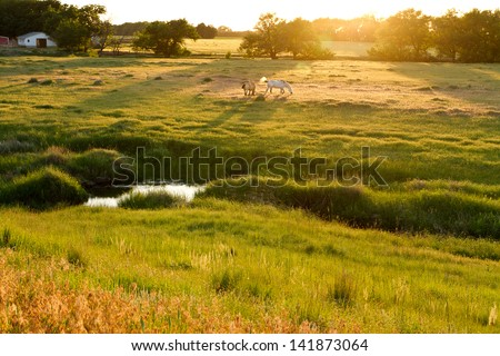 Kansas pastureland, late spring - stock photo