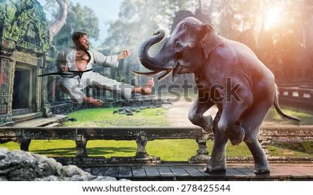Karateka fights with elephant - stock photo