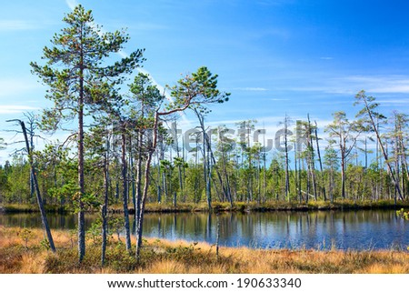 Karelian swamp with lake in evergreen woods - stock photo