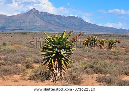 Karoo Landscape  - stock photo