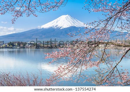 KAWAGUCHI, JAPAN - APR 13: Cherry blossom festival at lake Kawaguchi, April 13, 2013 in Japan. Viewing cherry blossom is a traditional Japanese custom. Kawaguchi is one of the best place to enjoy it - stock photo